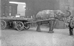 A black and white photos of an elephant pulling a cart with wagon wheels.