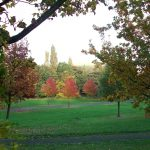 Photo of brightly coloured Autumn trees in park