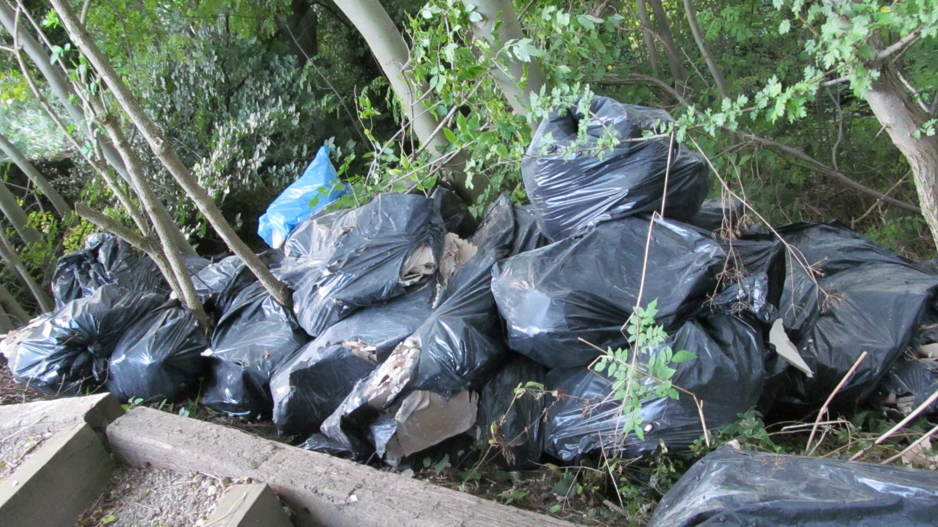A pile of bin bags amidst the trees in the nature reserve