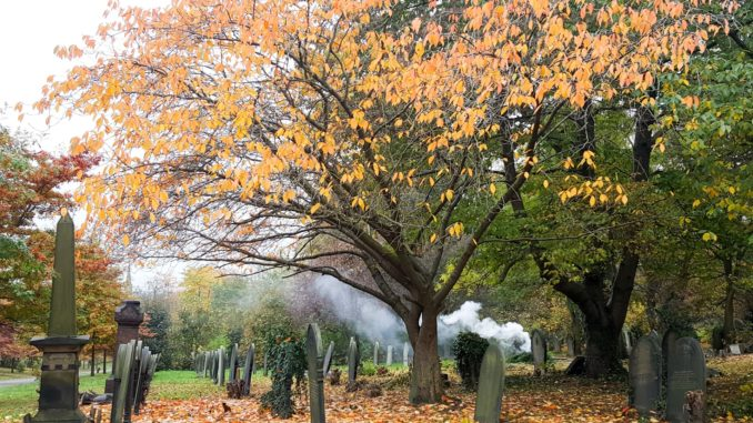 A photograph of trees and headstones in the cemetery with smoke in the distance