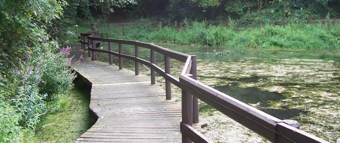boardwalk at crabtreee pond