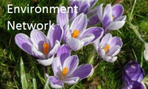 Purple crocuses with yolk-yellow stamens and the words Environment Network