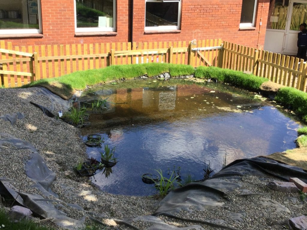 a still pond, in the shade.