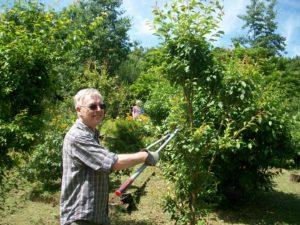 Multifaith Forest Garden maintenance day 2019 @ Multifaith Forest Garden, Parkwood Springs