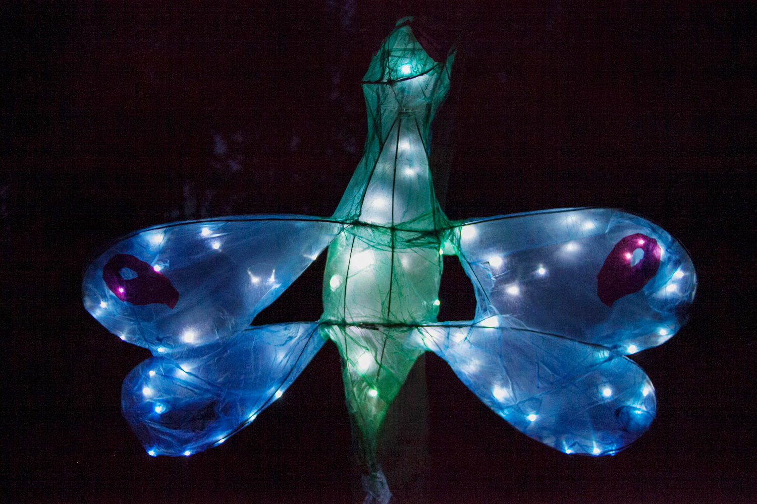 An illumines large Green dragonfly lantern with bright blue and red wings and white lights