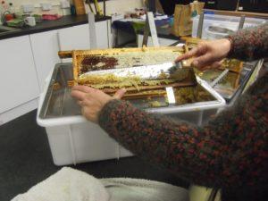 Linda scrapes wax from frames.