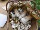 wild mushroom resitto