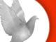 Messenger pigeon logo