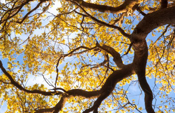 Parkwood Springs tree