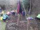 Forest Gardening Parkwood Springs