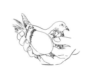 Emily's pigeon